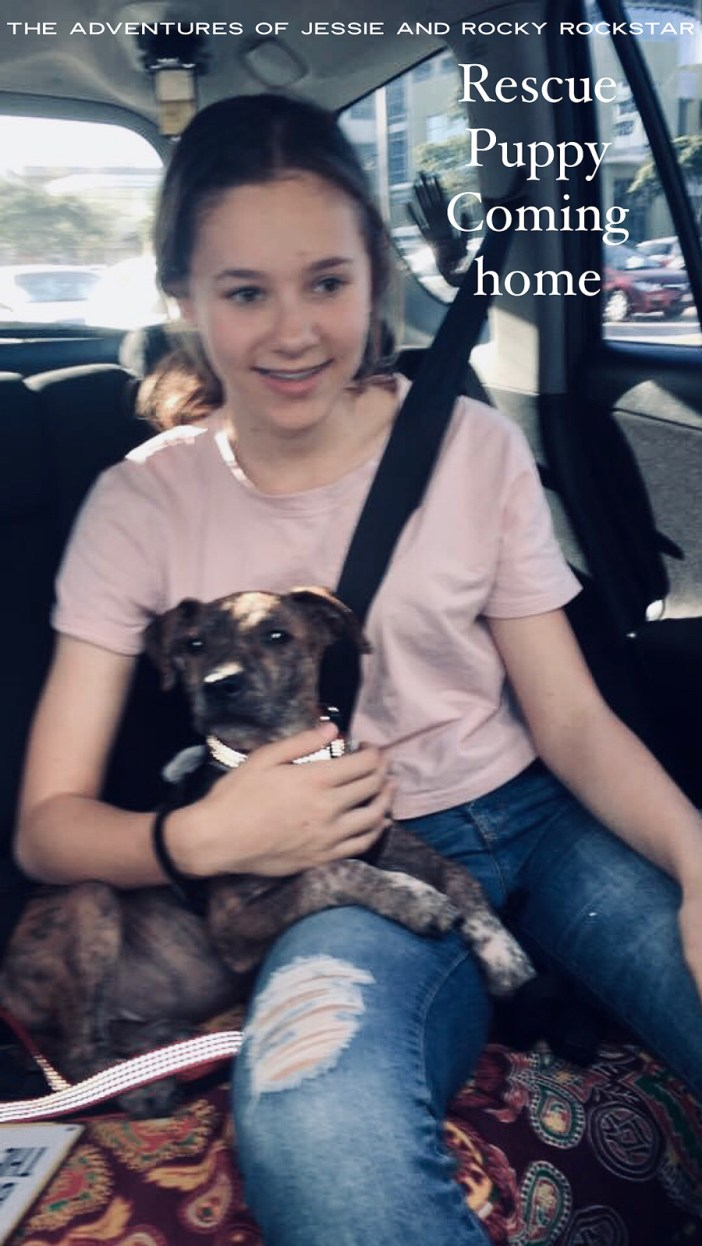 Rescue-puppy-coming-home