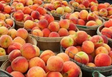Creamy Peach-sicle Smoothie