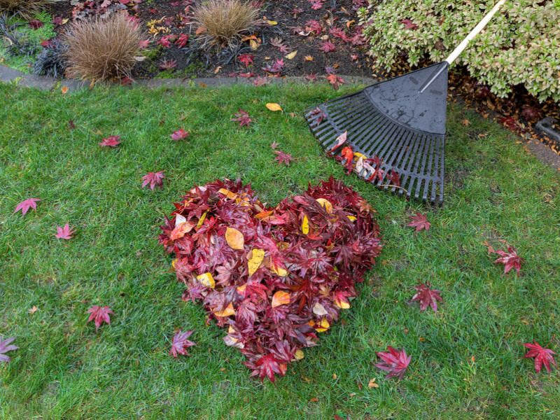 raking leaves into a heart shape