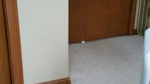 Ocarina's paw showing under the door