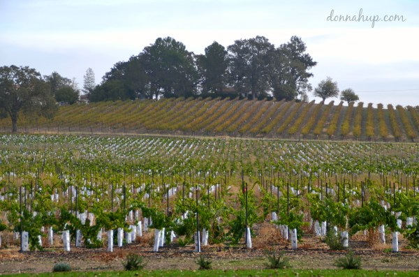 Visiting Paso Robles, CA