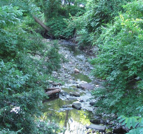 Tacony Creek tributary
