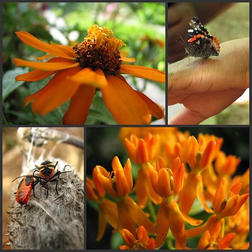 orange nature collage