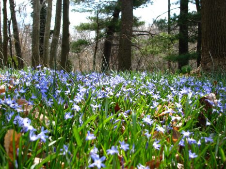 Spring starts on the forest floor.