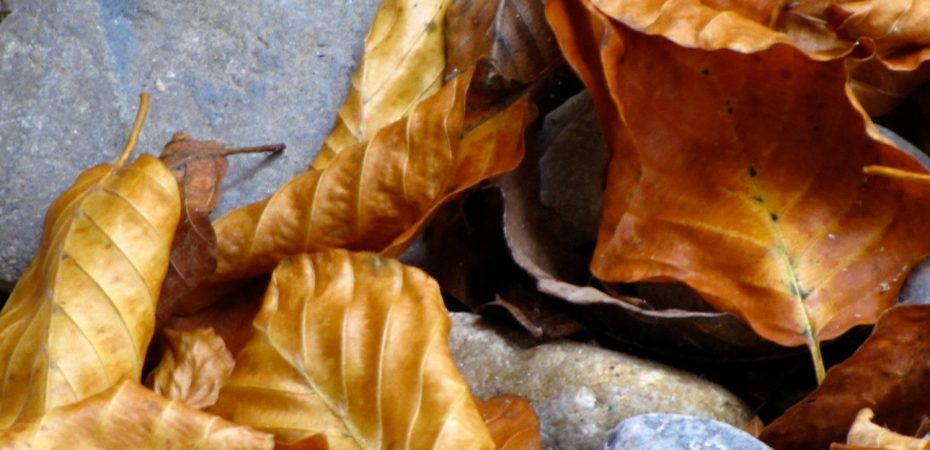 autumn leaves and stones