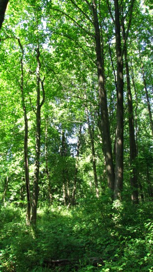 Warbler habitat - the forest at Schuylkill Center for Environmental Ed.