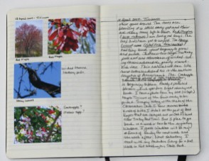 my journal, 18 April 2009