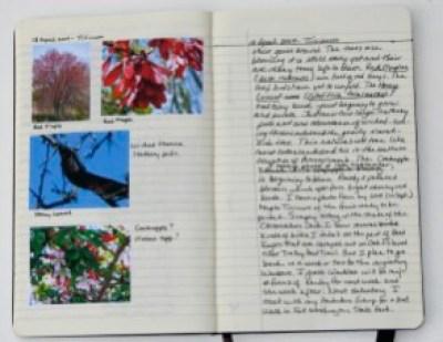 my nature journal, 18 April 2009