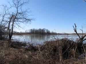 pond at Tinicum