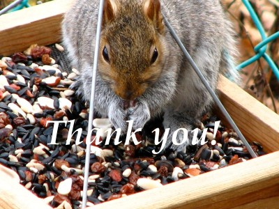 Thank You! squirrel