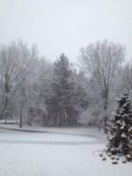 a snowy woodland