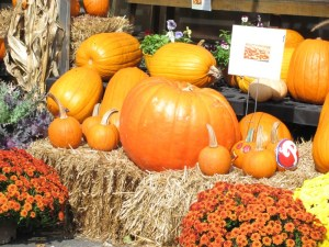 pumpkin harvest in autumn. Photo by Donna L. Long