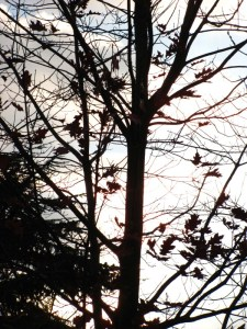an almost bare tree in late autumn. Photo by Donna L. Long