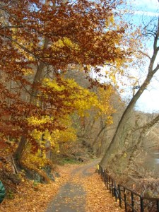 Trees along a path in the Wissahickon Valley Park. Photo by Donna L. Long.
