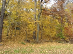 golden leaves in the Wissahickon in the fall