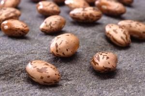 pinto beans Photos courtesy (usda.gov)