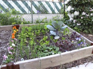 my spring vegetable garden - using the Square Foot Gardening Method