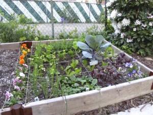 my spring vegetable garden - using the Square Foot Gardening Method