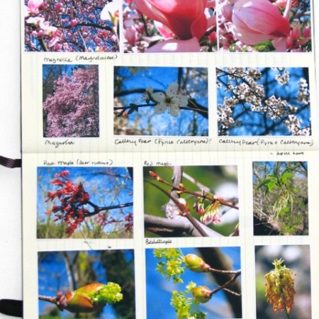 pages from my nature journal
