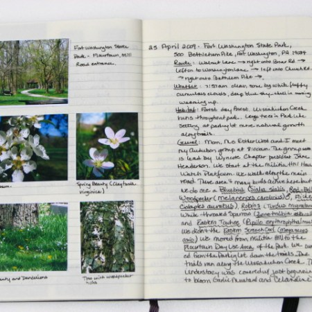 my nature journal 25 April 2009