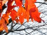 lingering fall leaves