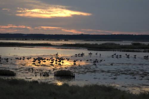 Pastel sky highlights migratory birds at Edwin B. Forsythe National Wildlife Refuge. USFWS/public domain.