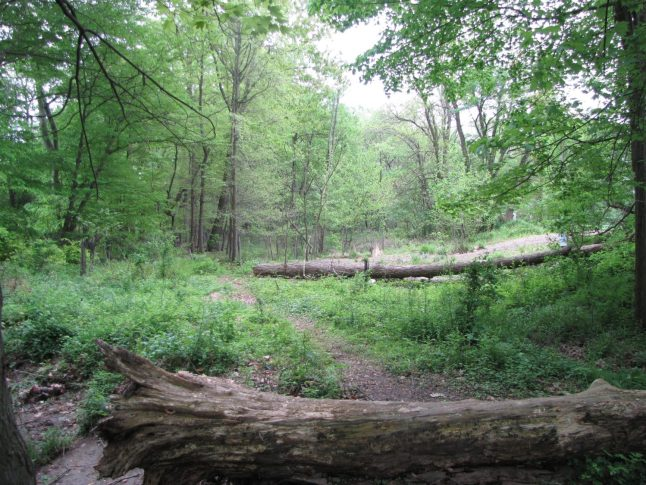 The un-enhanced side of the wetland at Jenkintown Creek