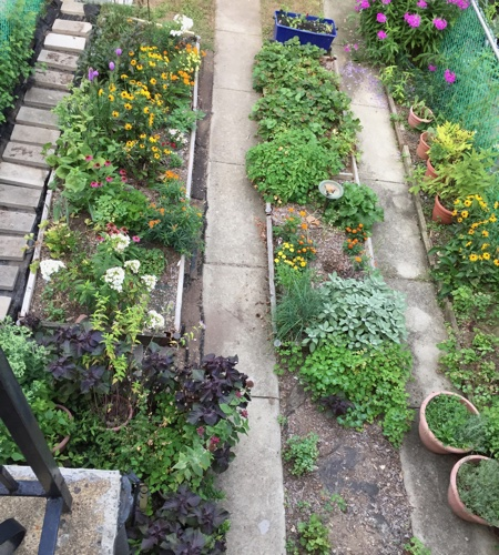 A overhead view of my garden.