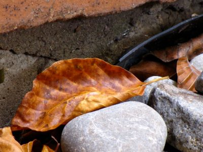 Autumn leaves and gray stones