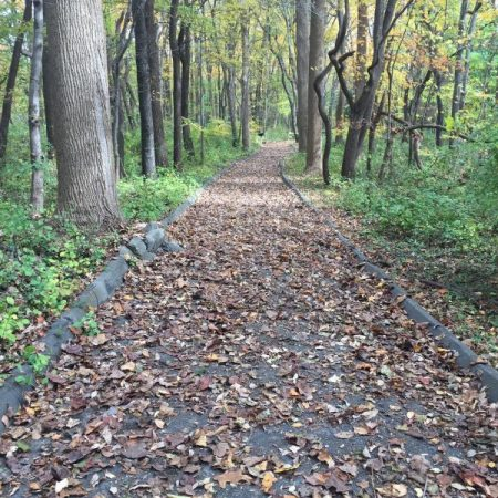 forest path covered in fallen leaves