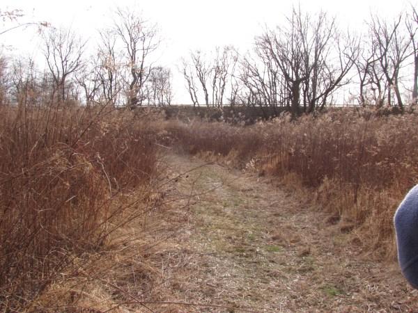 Song Sparrow and Savannah habitat - grassland, open fields, and meadows. Schuylkill Center