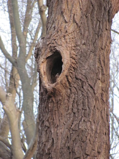 Tree Cavity - cover for extreme winter weather.