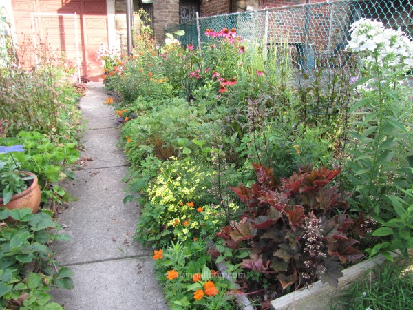 Donna's backyard habitat garden.