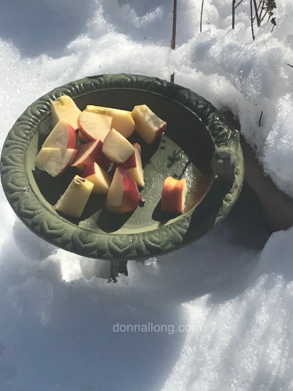Apples for the squirrels