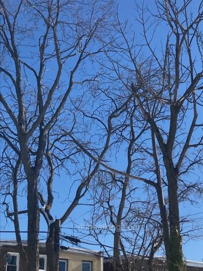 trees_bare_winter