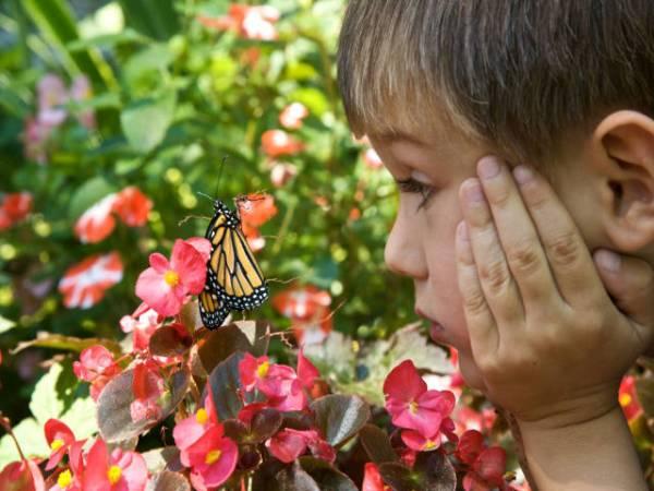 Child enjoys the beauty of a butterfly.