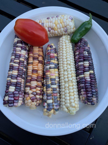 corn_painted-hill