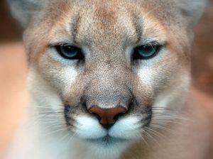 Identifying Mammals: A Photo Gallery