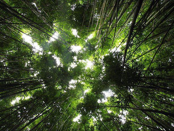 bamboo.jungle.plants2