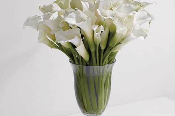 Vera Wang Flowers and Floral Arrangements