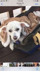 Dog Airline Bag