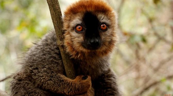 Diario di viaggio: Madagascar – Giorno 7