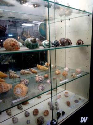 Una delle vetrine della collezione di molluschi