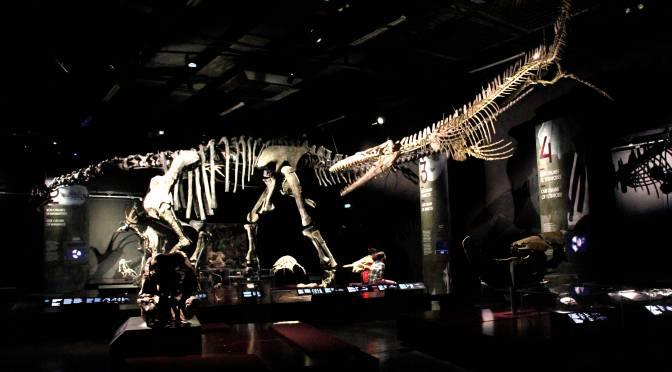 Il Museo di novembre: il Museo della Confluenza di Lione
