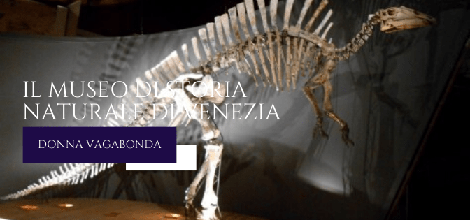 Il museo di marzo: il Museo di Storia Naturale di Venezia