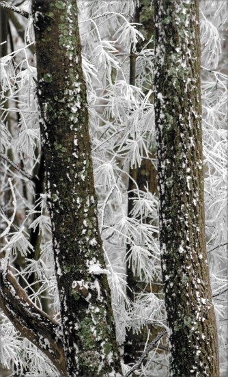 Fort Mountain State Pk frosted forest series 004