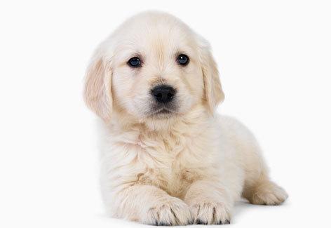 Sites Com Nomes de Cachorro Sites Com Nomes de Cachorro