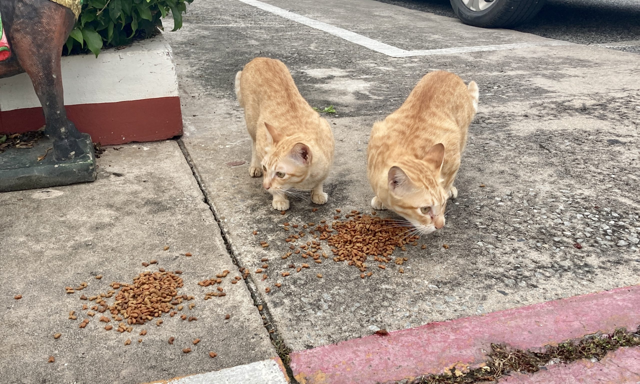 Week #1 – Over 200 Stray Cats & Dogs Got Fed