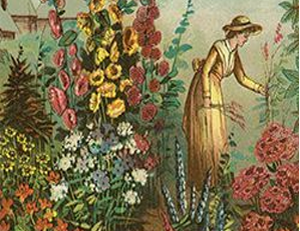 carta da semana o jardim
