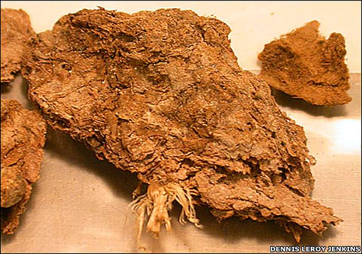 Image result for Paisley Cave coprolites